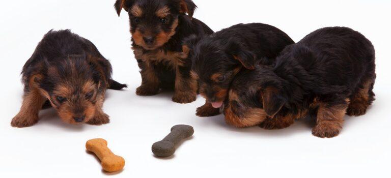 bæredygtigt hundefoder